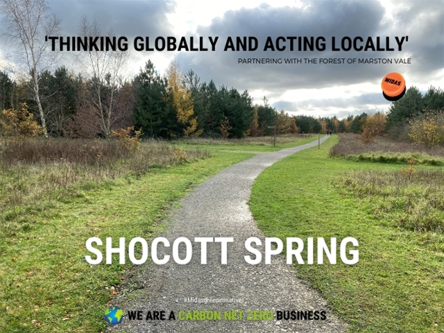 Shocott Sping - Our Local Woodland